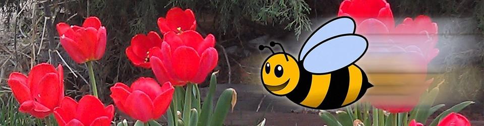 Busy Bee Preschool